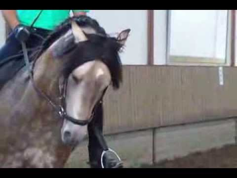 Azteca horse  B neo