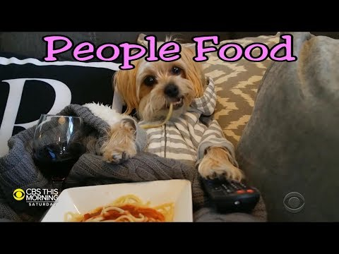 Dogs Are Human Too - Eat Healthy