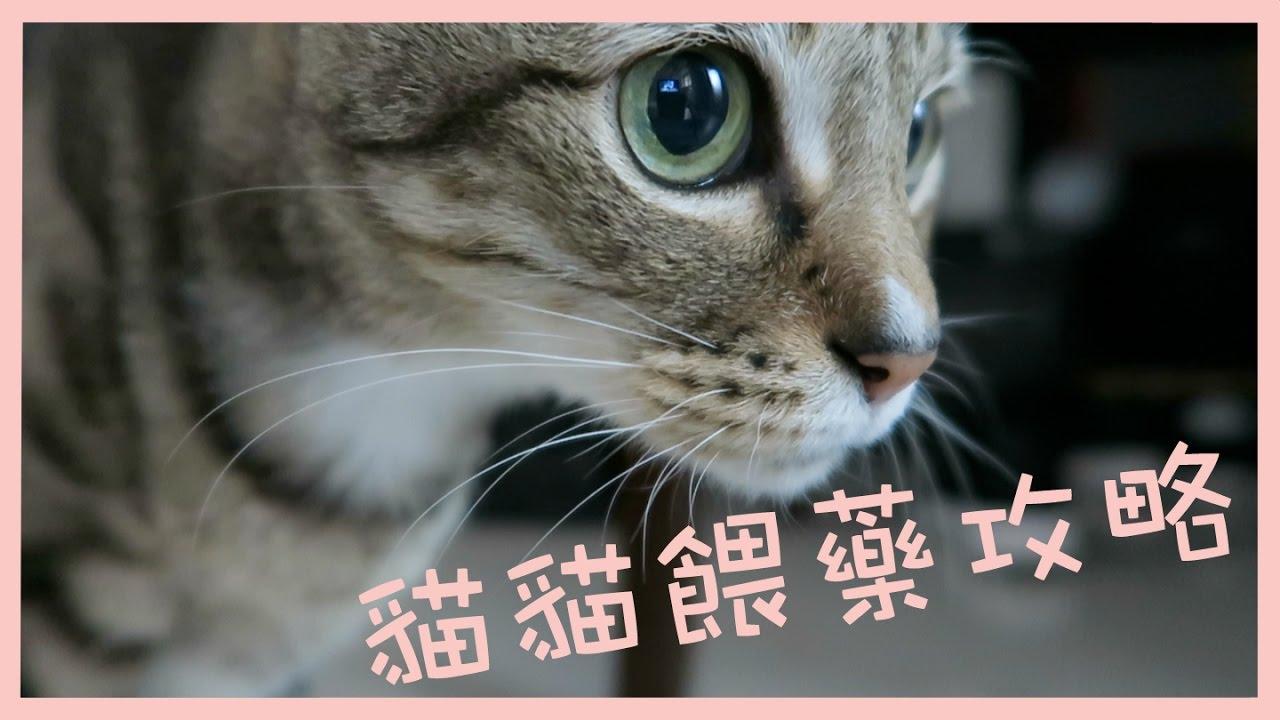 貓貓餵藥攻略|叮噹示範 - YouTube