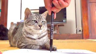 こうすると猫の目が回るって本当なの??