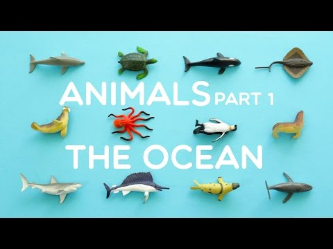 Learning Animals Names and Sounds and more for Kids 2015 - Part 1: The Ocean