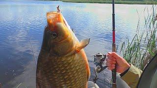 Рыбалка на поплавочные снасти Карпы и караси стали в очередь My fishing