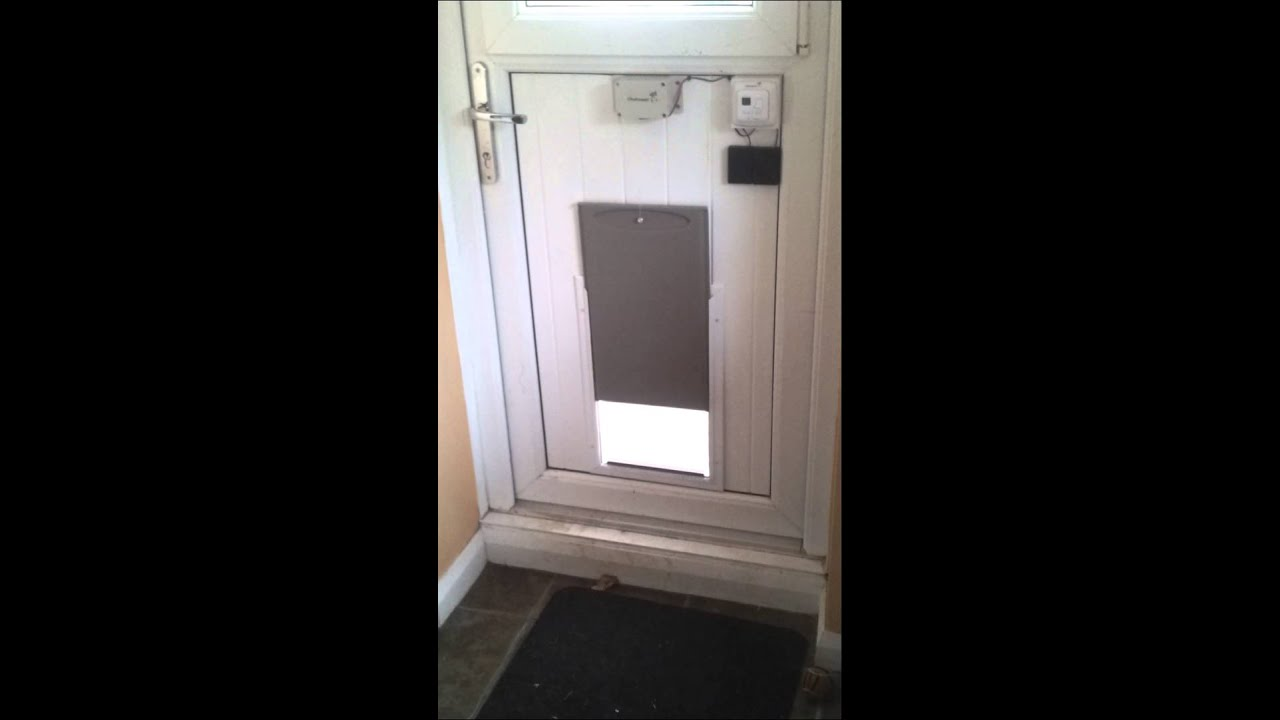 Diy Automatic Dog Door Youtube