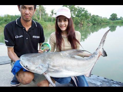 Chao Phraya giant catfish ฉลามน้ำจืด แห่งเจ้าพระยา by fishingEZ