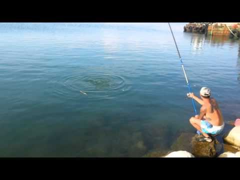 igor lole mitrovic pecanje ciplija