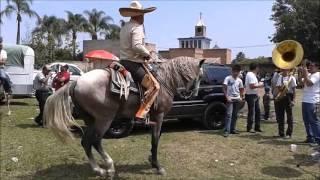el mejor caballo bailador
