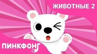 Белый Медведь — Бе-Бе-Белый Медведь | Песни про Животных | Пинкфонг Песни для Детей