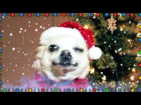 Singing Chihuahua - Christmas Song 3: Silent Night