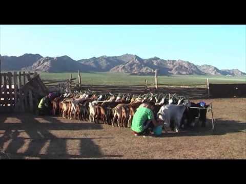 Mongolie vers l'infini et au delà