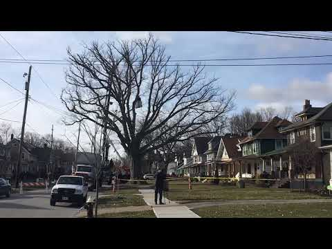See a time-lapse video of 250-year-old tree taken down in Lakewood in under 60 seconds