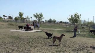 Dog Obedience Training - Sit Commands In Dog Park