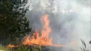 OSP Wysokin - Pożar lasu na granicy woj. mazowieckiego z łódzkim