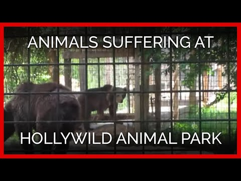 Animals Suffering at Hollywild Animal Park