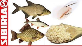 Уловистая ПЕРЛОВКА на РЫБАЛКУ Просто и быстро. На карася и белую рыбу. рыбалка на перловку