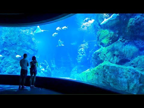[HD] Bangkok Family & Kids Trip 2017 : Sea Life Bangkok - Dream World - Safari World