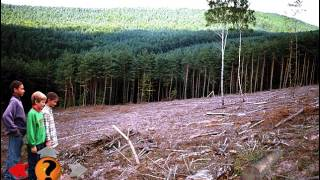 Being a Scientist: The Case of the Vanishing Trees (1996)