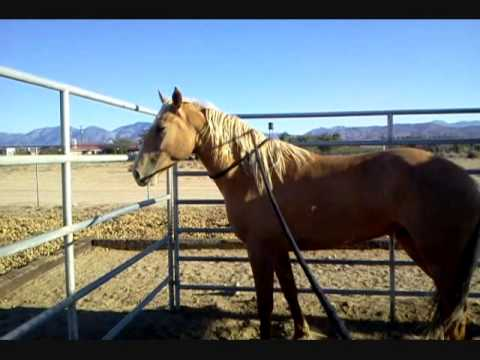 Malibu - BLM Mustang - Day 13 - Training Day 11