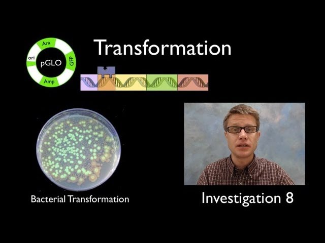 Ap Biology Labs Part 2 Youtube