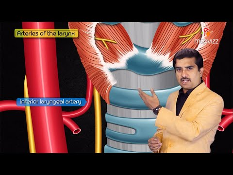 Anatomy And Physiology Of Larynx , Action Of Laryngeal Muscles , Dr Bhanu Prakash