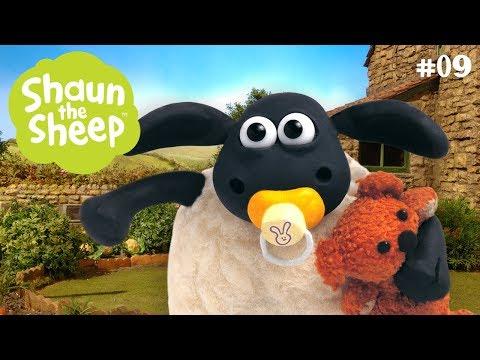 Timmy nức nở - Những Chú Cừu Thông Minh