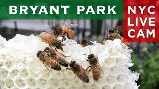 Bryant Park Bee Cam