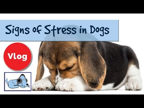 how-to-tell-if-your-dog-is-stressed.-signs-of-stress-in-dogs.-🐶-#anxvlog02