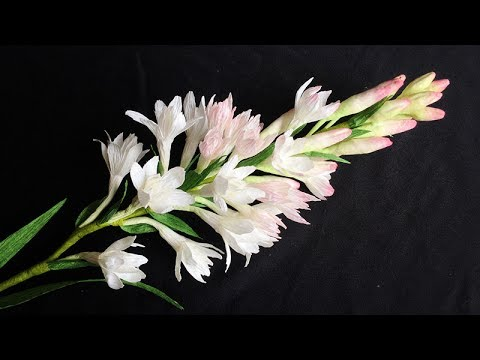 abc tv how to make tuberose paper flower from crepe