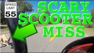 Pit Bull Almost Takes Me OUT on Scooter!