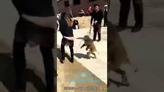 Funny Animals   Thug Life Animal Edition   Stupid Amimals   Funny Videos  