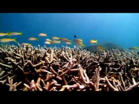 澎湖南方四島的底棲動物們