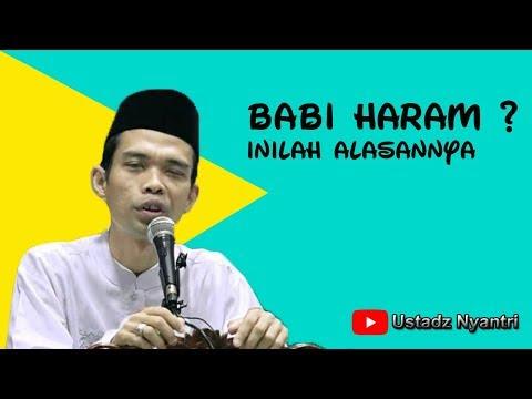 Kenapa Allah Menciptakan Babi? Ustadz Abdul Somad, LC. MA