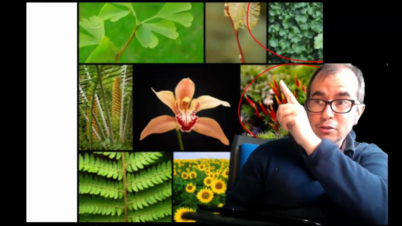 Resultado de imagen de plantas xacobo de toro