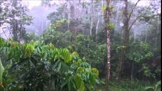 8 Hours Tropical Rainstorm Sounds
