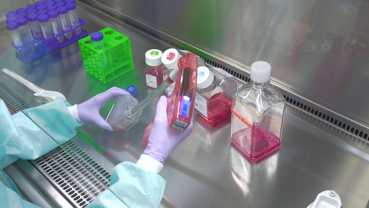 Passaging Cells: Cell Culture Basics
