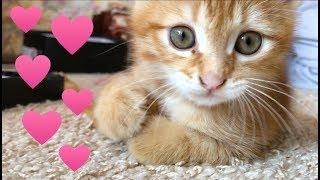 Маша играет с котенком Симкой, наш новый питомец. Видео про котёнка Симку