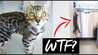 SHE FREAKED OUT | Bringing our Bengal Kitten home!!!