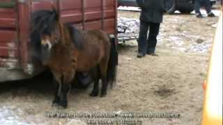 IHP Italian Horse Protection - Skaryszew, 27/02/2012.MPG