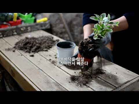 꽃집삼촌이 알려주는 분갈이 방법(기초편)