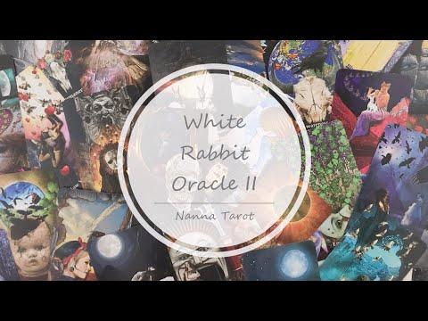 開箱  白兔神諭卡 II • White Rabbit Oracle II // Nanna Tarot