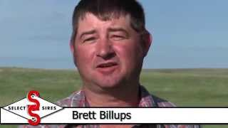 Improving Your Cowherd with AI-Select Sires Beef