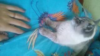 Мой любимый котик.  скучаю 😭так не хватает тебя.  Ты всегда в моем сердце, люблю тебя 🐱