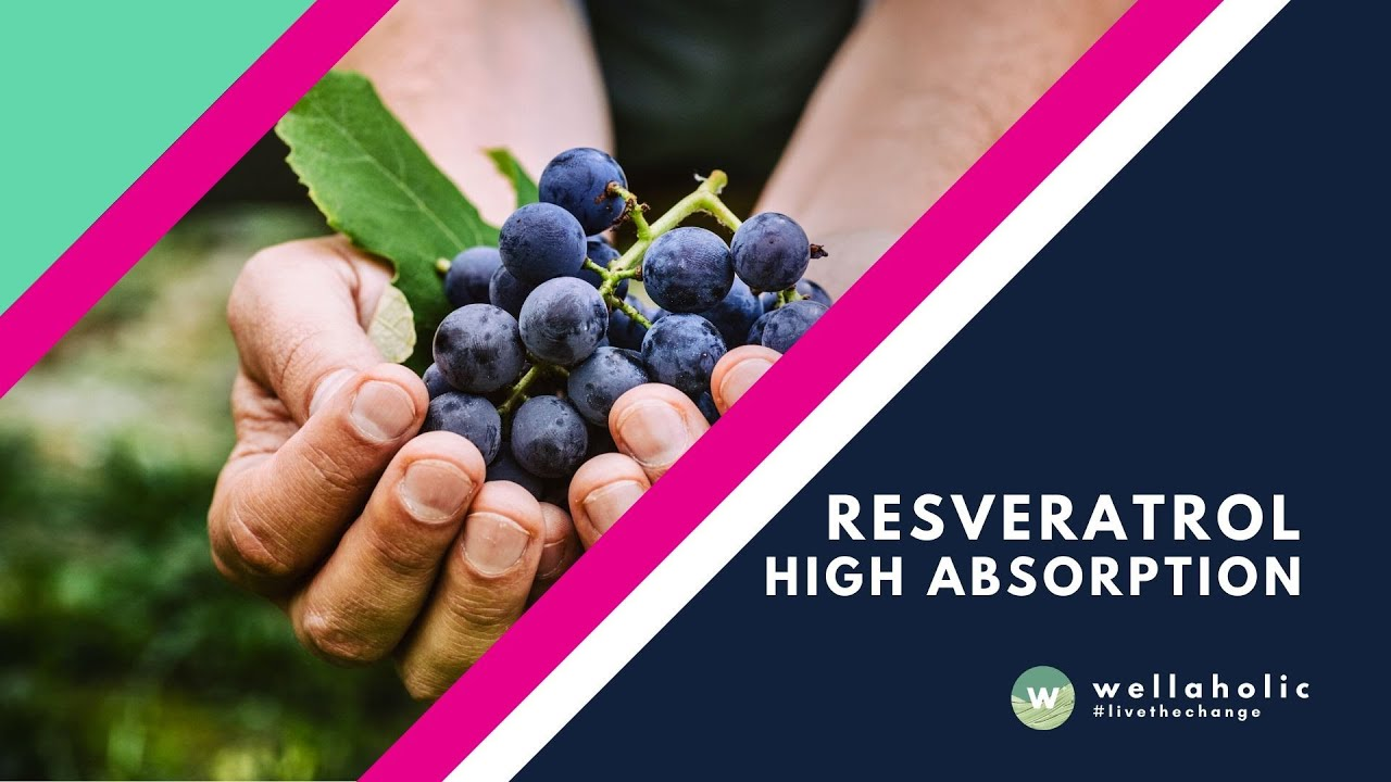Resveratrol High Absorption Supplement By Wellaholic Youtube