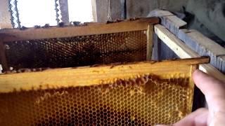 Делаем улей для пчёл за 1 час из старых досок.