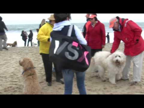 2016 Dewey Beach Doodle Romp Youtube