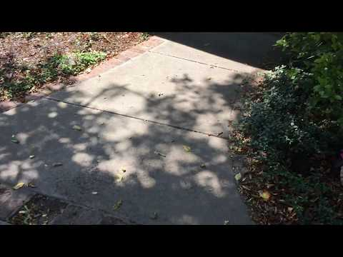 Barkley Portuguese Water Dog Door Greeting