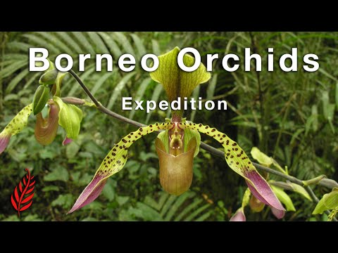 Borneo Orchids Expedition