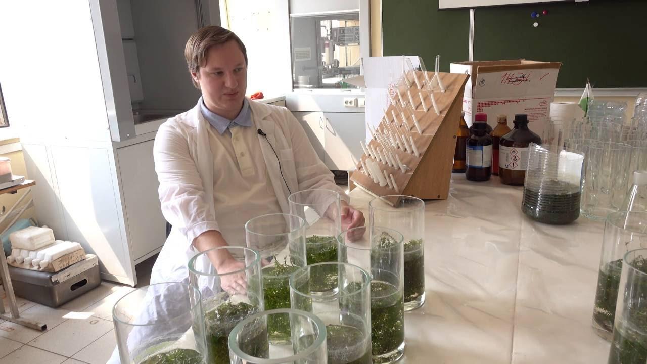 Современные фитотехнологии. Изучение взаимодействия водных растений с загрязняющими веществами.