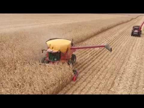 Grain Spills