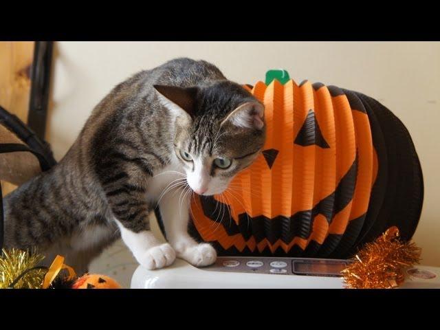 ハロウィンと猫と犬 – Halloween Cats & Dogs –