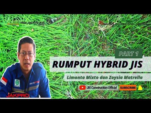 MOCKUP RUMPUT HYBRID DI JAKARTA INTERNATIONAL STADIUM (JIS)